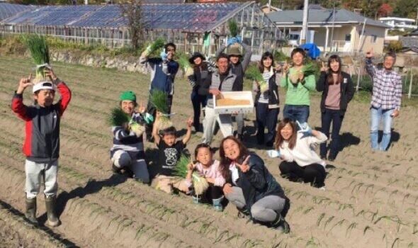 淡路島ハートス農場の収穫のようす(写真提供:ハートスフードクリエーツ)