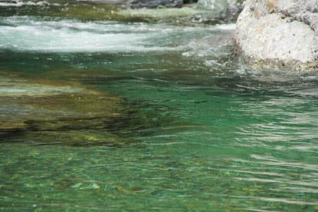 かつての「洗剤の川」も近年はアユが遡上する川に変貌 国交省が18の「水質が最も良好な河川」を発表