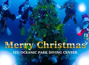 水中のメリークリスマス! 海底ツリーのまわりをサンタがスイスイ