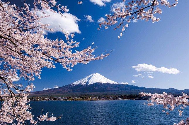 「絶景・富士山と桜 日帰り撮影の旅」