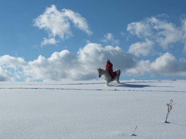 雪上で乗馬が体験できる