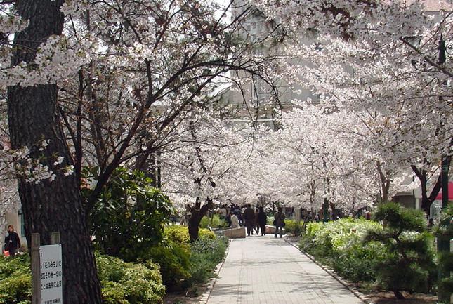 阪急宝塚駅と大劇場を結ぶ「花のみち」。宝塚歌劇への花道にたとえられるが、歌劇101年目はトップらの巣立ちの花道にも