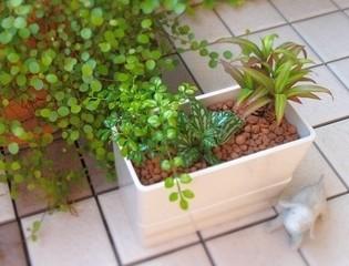 観葉植物(アレンジ例)