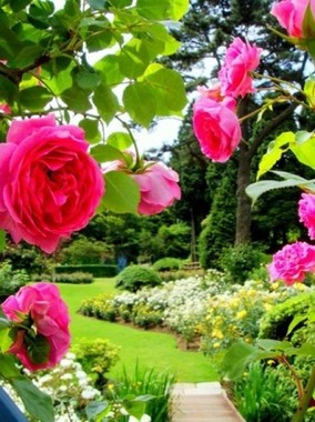 約2000本のバラが咲く「ローズウオーク」(イメージ)