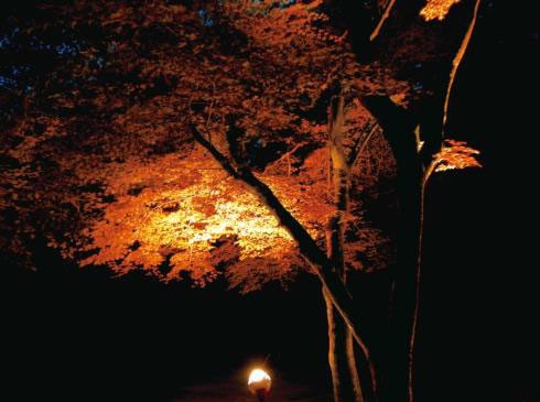 ライトアップされた紅葉(イメージ)