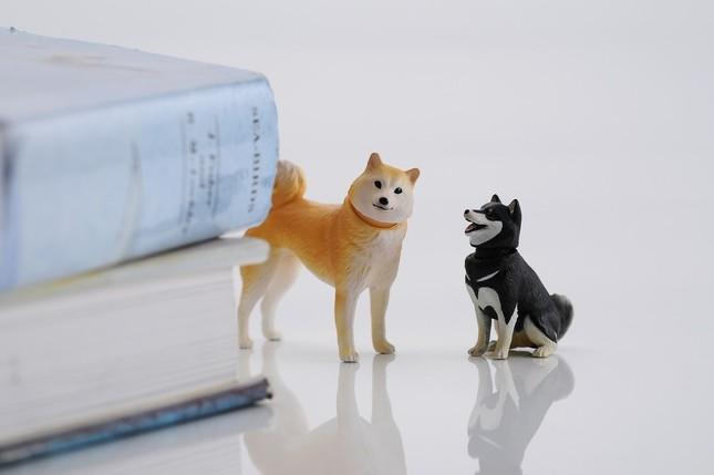「柴犬&豆柴」