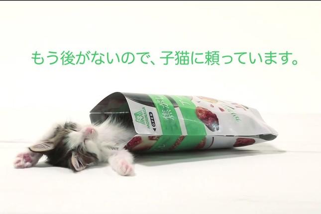 「もう後がないので子猫に頼っています」(画像は動画のスクリーンショット)