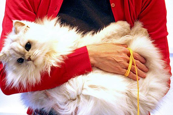 真っ白な毛が美しいサラちゃん