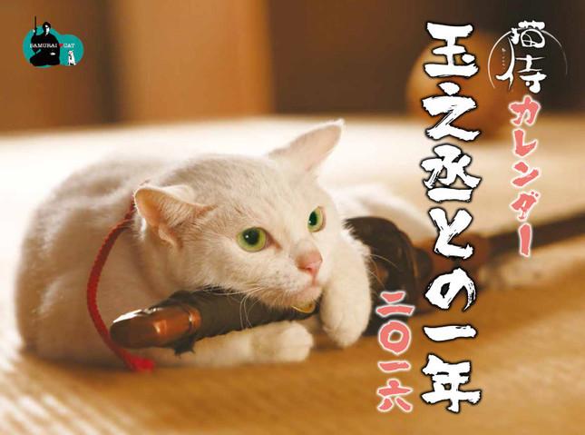 魅惑の白猫・玉之丞に癒される2016年