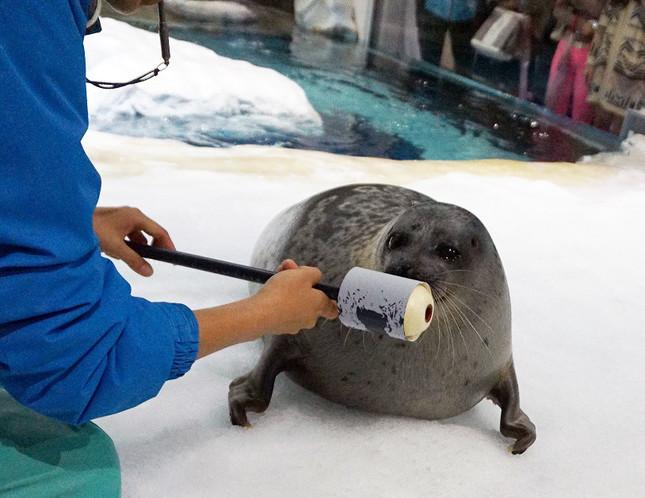 海の生き物からキスマークを採取