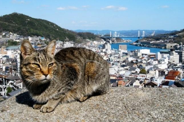 尾道 猫好きのまつり
