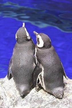 「Sweet Penguins」のイメージ