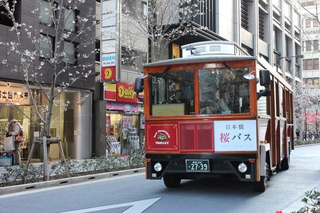 日本橋の桜の名所を気軽に回れる桜バスの運行も
