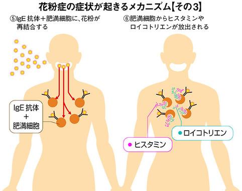 「花粉症の症状が起きるメカニズム」その3