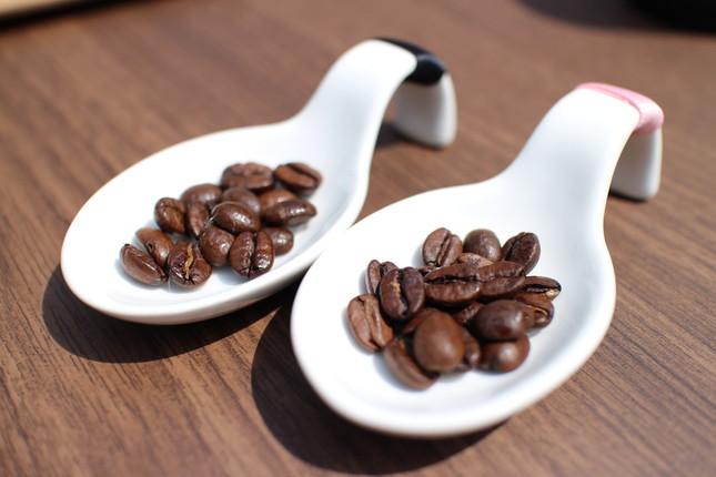 新旧焙煎された豆を見て・触れて・味わって比較できる