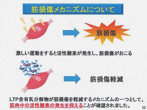 「LTP」含有乳タンパク分解物が筋損傷メカニズムに与える好影響が、マウス実験で明らかに