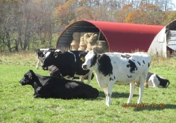 NZ式の放牧酪農は、北海道に根づくか