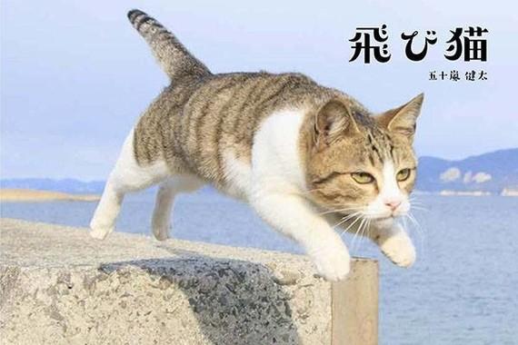 五十嵐健太さんの代表作の一つ「とび猫」