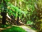 かなりアスリート的傾向を持っていたベートーヴェンの「ベト散歩」から生まれた「田園」
