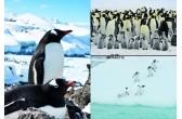 極寒の世界に住むかわいい動物たち