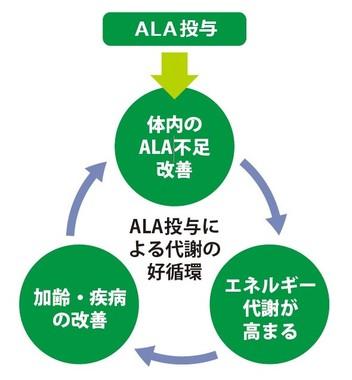 ALAを外部摂取することで、人の体内に好循環サイクルをもたらす