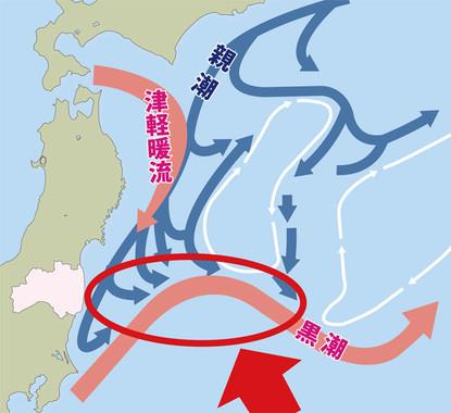 福島県沖の海は親潮と黒潮が出会い、豊かな漁場を形成している