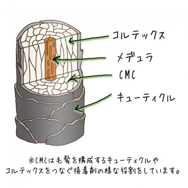 髪内部のCMCに注目
