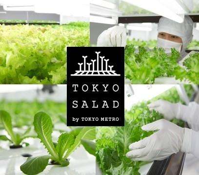 東京サラダを使った人気メニューが登場!