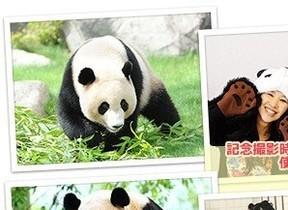 ジャルパック「パンダに大接近!南紀わくわく体験!」おやつあげもできる