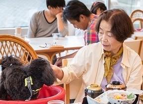 「JALワンワンJET 鹿児島3日間」機内もホテルも愛犬と一緒