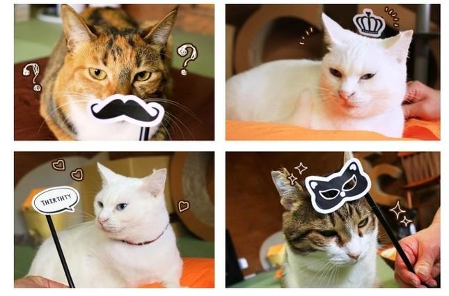 ストローや割り箸などにくっつけて猫と遊ぶ