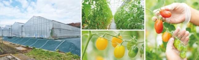 「小田急・神奈中ファーム城山農場」(左)と栽培風景(イメージ)