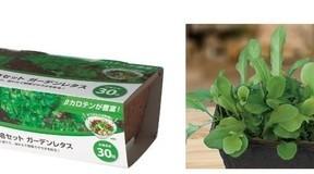 手軽に室内家庭菜園をスタート「DCMブランド 栽培セット」新発売