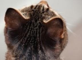 「肉球」「にゃんたま」...ネコのパーツ写真が大集結 「ねこのまるまる展」