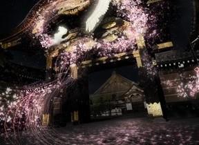 二条城初! 本物の桜×ネイキッドの先進アートで新感覚お花見体験