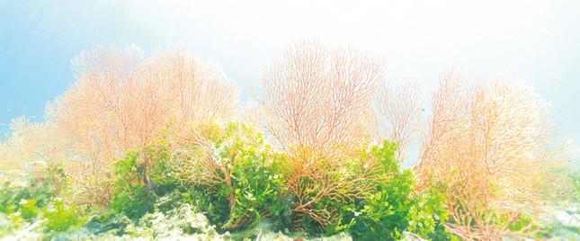 カラフルで幻想的な海中風景