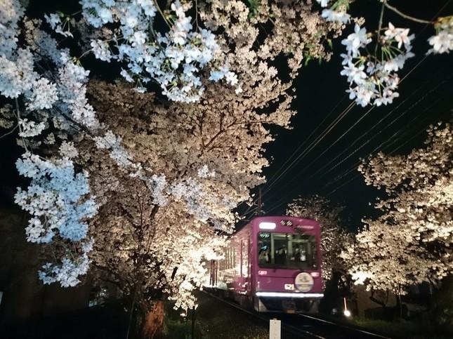 桜のトンネルライトアップと「夜桜電車」
