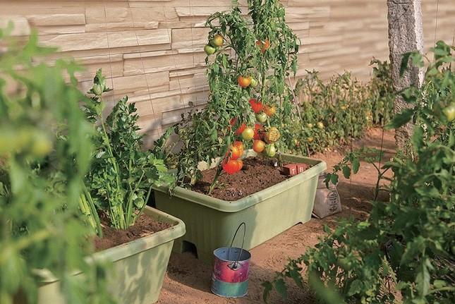 春から夏にかけて絶好の家庭菜園シーズン