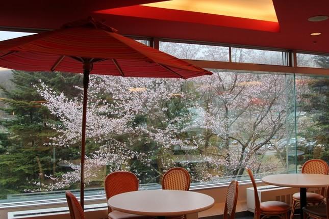杜鹃餐厅的风景