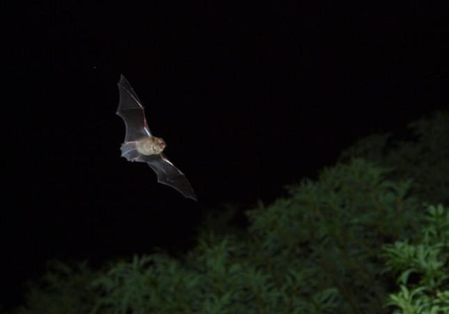 神秘的なコウモリの乱舞