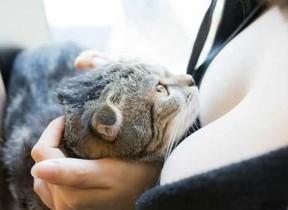 おっぱい×ネコを組みあわせた写真集「パイニャン」 出版社「究極の癒しを目指しました」