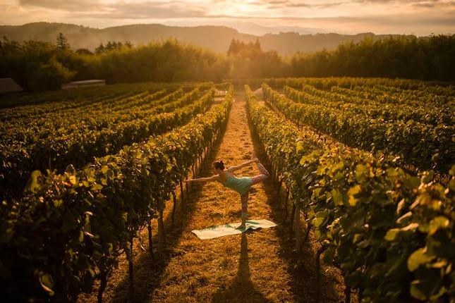 葡萄畑で体をほぐす朝