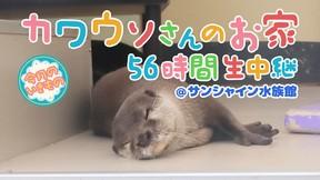 「けものフレンズ」声優陣による飼育体験コーナーも! ニコ生、コツメカワウソを56時間観察生中継