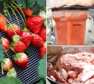 朝摘み自社栽培完熟いちごをギュッと凝縮した極上ジェラート!