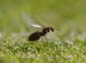 【動画】錦織を苦しめる「結婚飛行」 ウィンブルドン「羽アリ」大量発生のわけ