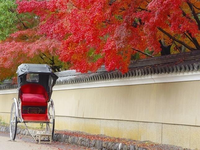 美しい紅葉をふたり占め