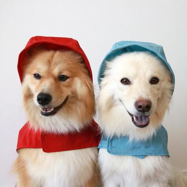 雨の日も犬用レインコートで安心