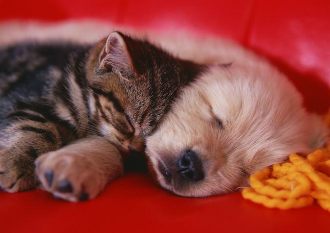 猫と犬どっちが好き?