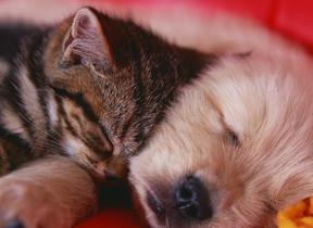 【犬派vs猫派】ついに決着! 全国1万人が選んだ「好きな動物」トップは...