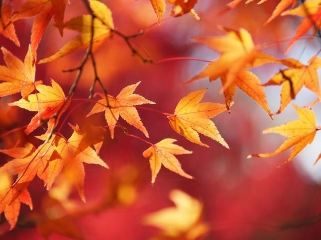 和洋室を紅葉で装飾